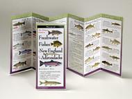 Freashwater Fishes of New England and the Adirondacks