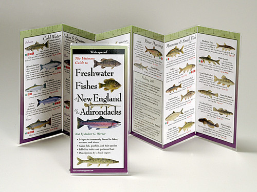 Freashwater Fishes of New England and the Adirondacks