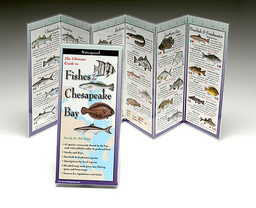 Fishes of the Chesapeake Bay