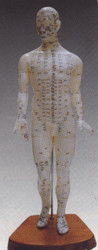 Acupuncture Model of the Human Body