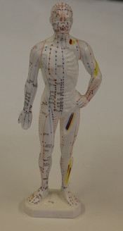 Human Body Acupuncture Model, Small Size