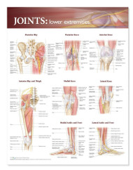 Joints Anatomy Poster, Lower Extremity