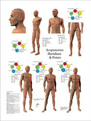Acupuncture Points of the 12 Main Meridians, CV & GV