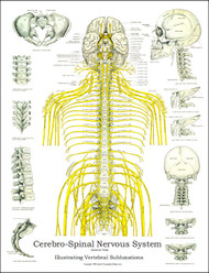 Spinal Nerves and Subluxation Poster