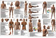Acupuncture Points -12 Main Meridians, CV & GV