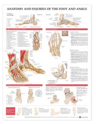 Foot and Ankle Anatomical Chart Anatomy and Injuries
