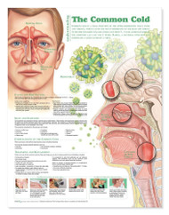 The Common Cold Poster