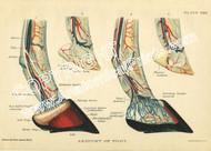 Horse Foot Print
