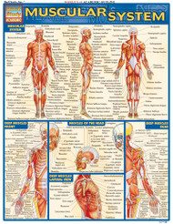 muscle and skeletal anatomy posters - clinicalcharts, Cephalic Vein