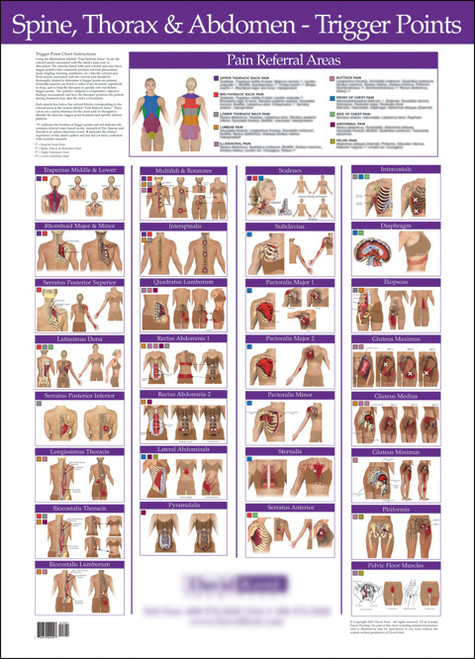Spine thorax abdomen trigger point wall chart clinical charts