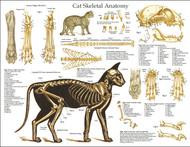 Feline Skeletal Anatomy