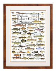 Fishes of Lakes & Streams of Minnesota Poster