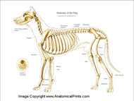 Dog Skeletal Chart