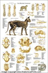 Feline Poster