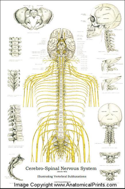 Spinal Chart Erkalnathandedecker