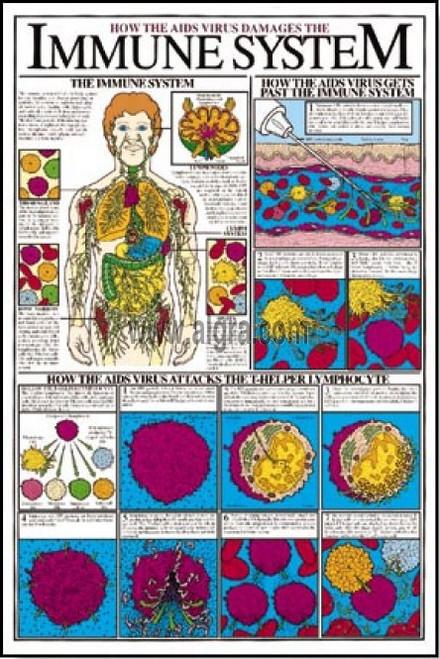 Immune System Poster