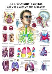 Human Respiratory Poster