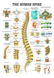 Spine Poster