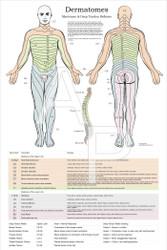 Dermatomes and Myotomes