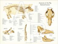 Porcine Skeletal Anatomy Poster