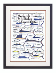 Mackerels,Tuna And Billfishes Of The US Poster