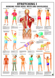 Neck and Shoulder Stretching Poster