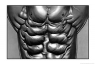 Abdominal Muscle Poster