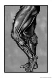 Leg Musculature Poster