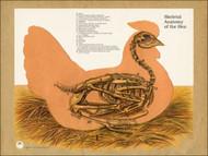 Chicken Skeletal Anatomy Poster