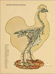 Chicken Standing Skeletal Poster