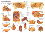 Cow Internal Organs Poster