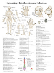 Acupuncture Point Poster