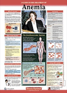 Anemia Patient Anatomical Chart