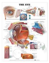 Eye Anatomy Chart