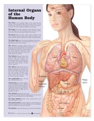 Internal Organs of the Human Body Anatomy Poster
