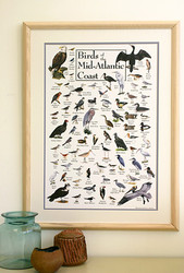 Birds of the Mid-Atlantic Coast Poster