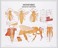 Honeybee Chart