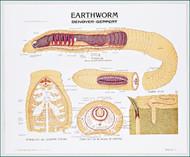 Earthworm Chart