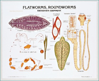 Flatworms and Roundworms