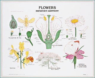 Flowers Wall Chart