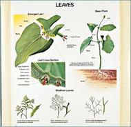 Leaves Charts