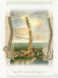 Spine and Pelvis Anatomical Poster