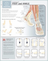 Foot and Ankle Stengthening Exercise Chart