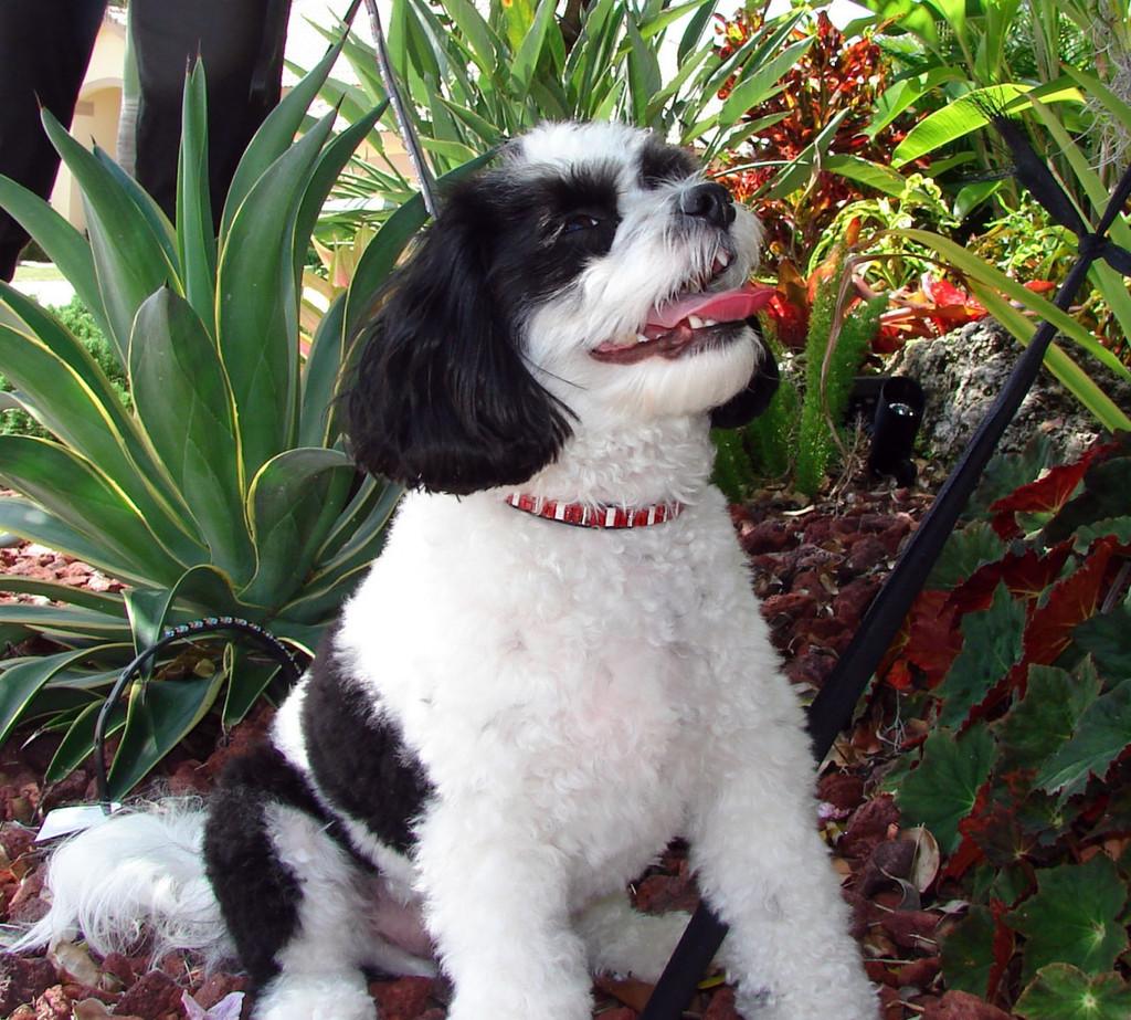 Hot Tamale Pet Collar