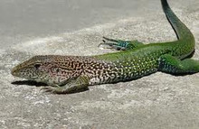 Other, Green and Lizards on Pinterest