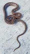 Anerythristic Tessera Corn Snake