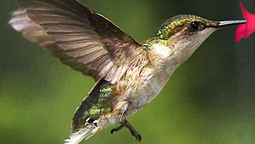 animals-flipbooks-landing-image.jpg