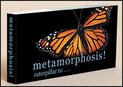 Butterfly Metamorphosis Flipbook Cover