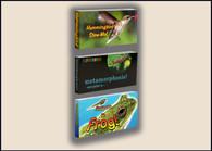 Nature Flipbook 3 Pack:  Caterpillar to Butterfly, Hummingbird, Tadpole to Frog