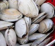 4 Pounds of Steamers!